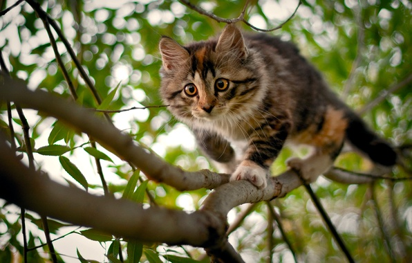 Picture branches, kitty, tree