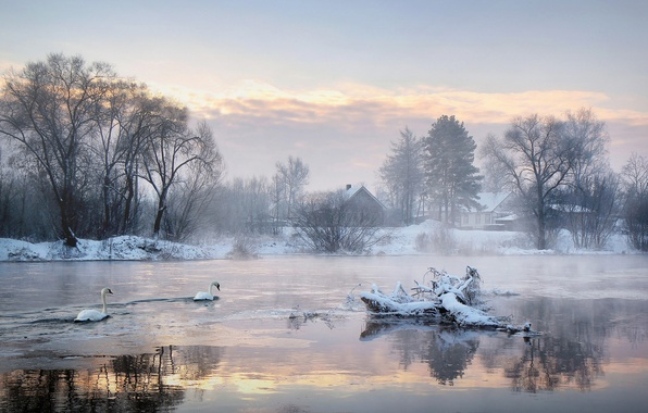 Picture cold, winter, trees, lake, home, morning, swans