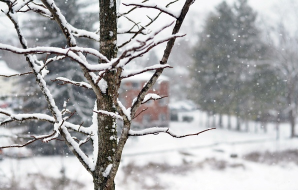 Picture winter, snow, trees, snowflakes, branches, nature, tree, home