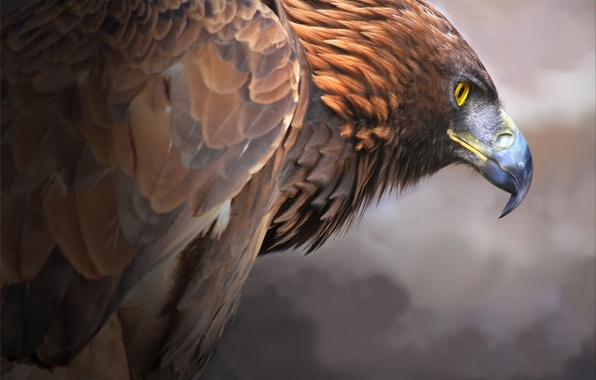 Picture bird, predator, beak, Golden eagle, Golden Eagle