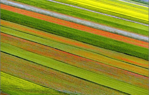 Picture flowers, nature, plantation