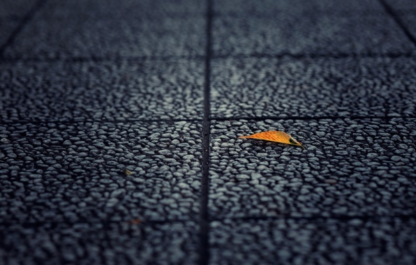 Picture asphalt, macro, yellow, background, earth, widescreen, Wallpaper, leaf, wallpaper, leaf, widescreen, background, full screen, HD …