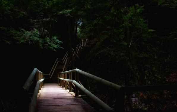 Picture bridge, nature, Park