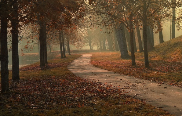 Picture autumn, leaves, trees, fog, lake, Park, the way