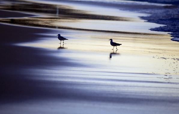 Picture sea, birds, night, nature
