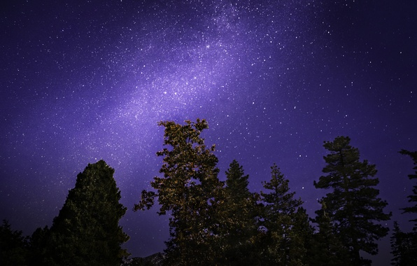 Picture the sky, stars, trees, night, the milky way