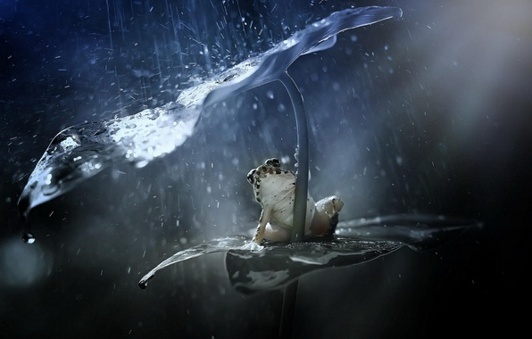 Picture squirt, sheet, rain, frog