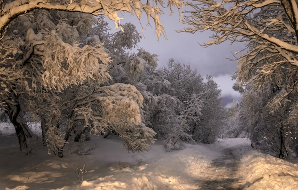 Picture winter, road, forest, snow, trees, Iceland, Iceland, Kópavogur, Kopavogur