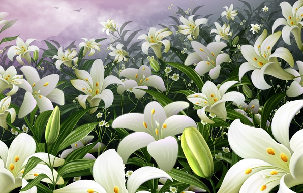Picture flowers, Lily, Garden, kidney