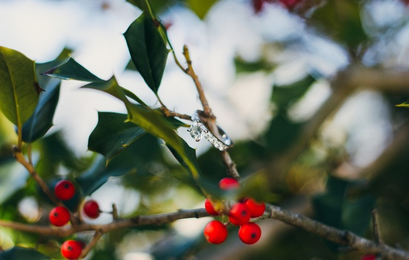 Picture leaves, branches, berries, stone, ring, red