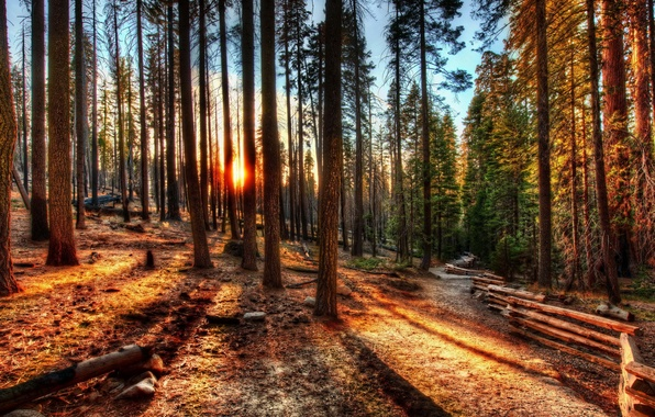 Picture forest, trees, sunset, nature, photo, dawn, HDR, CA, USA, Yosemite
