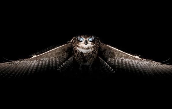 Picture birds, owl