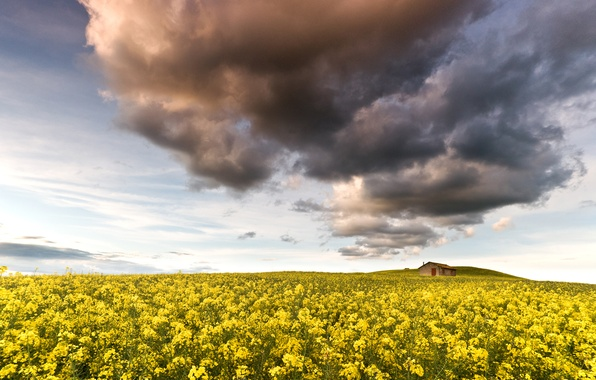 Picture field, the sky, clouds, flowers, nature, house, yellow, rape