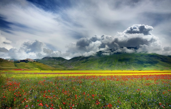 Picture field, clouds, flowers, mountains, nature, plain, valley