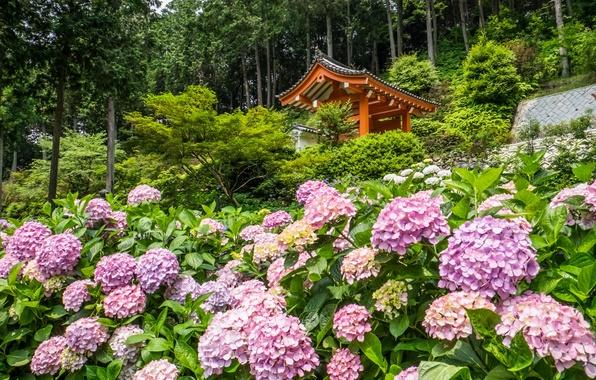 Picture trees, flowers, Japan, temple, Japan, gazebo, Kyoto, Kyoto, hydrangeas, Mimuroto-ji Temple
