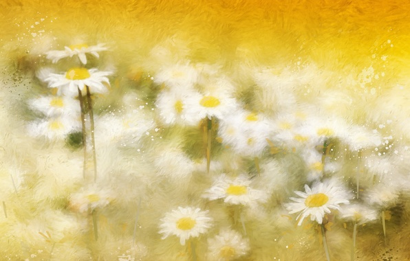 Picture background, color, chamomile
