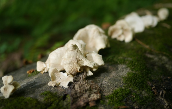 Photo wallpaper Macro, Mushrooms, Moss, Forest