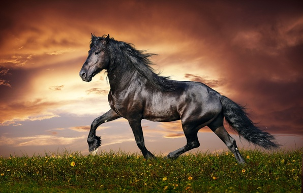 Picture flower, sky, field, nature, sunset, clouds, mane, hana, muscular, Horse, kumo, beautiful animal, thoroughbred, trot, …