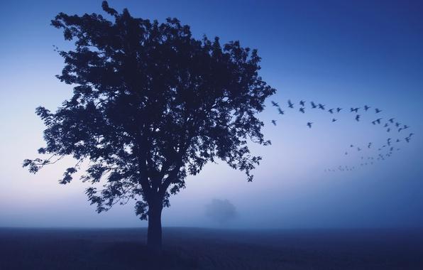 Picture birds, fog, tree