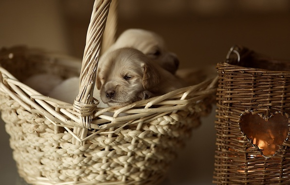Picture basket, heart, puppy