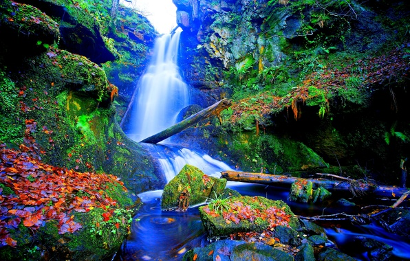 Picture leaves, stones, moss, plants, Waterfall