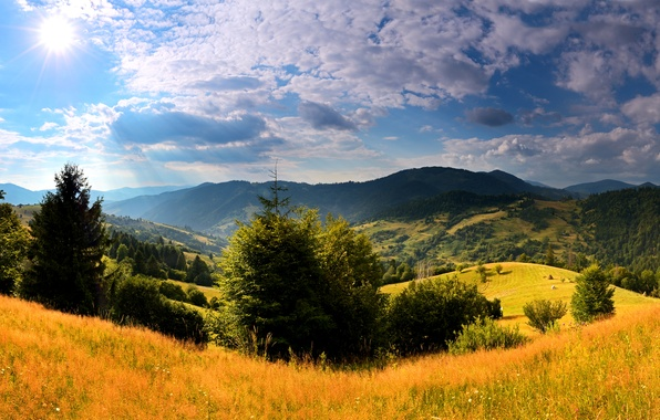 Picture the sky, grass, the sun, clouds, trees, mountains, field, beauty, Ukraine, forest, meadows, Carpathians
