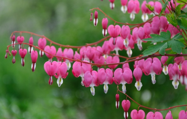 Photo wallpaper macro, broken heart, the bleeding heart, pink