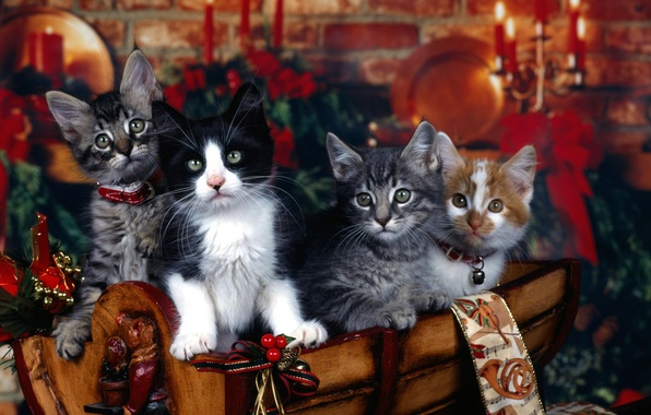 Picture cats, holiday, cats, new year, kittens, collar, Christmas decorations, four