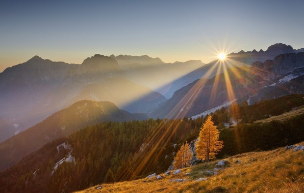Picture forest, the sun, trees, sunset, mountains