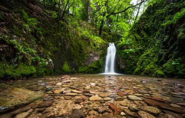 Picture forest, river, stones, waterfall, Germany, Germany, Black Forest, The black forest