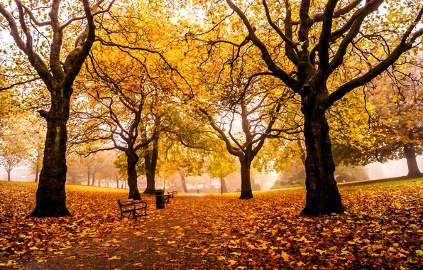 Picture road, autumn, leaves, trees, Park, England, yellow, UK, alley, benches, benches, shop, Sheffield, Sheffield, Weston …