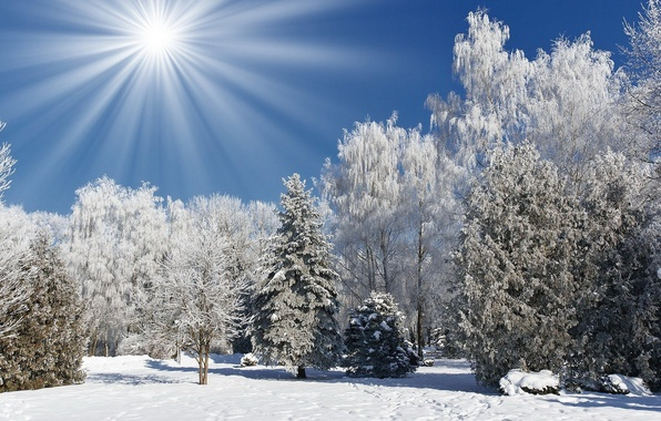 Picture winter, forest, the sky, the sun, rays, nature, photo