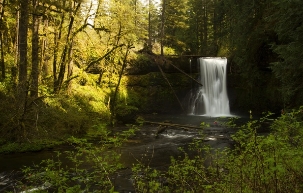 Picture forest, the sun, trees, branches, stream, stones, waterfall, moss, USA, the bushes, Oregon, Silver Falls …