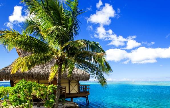 Picture sand, sea, tropics, palm trees, shore, Bungalow, Bora-Bora, French Polynesia