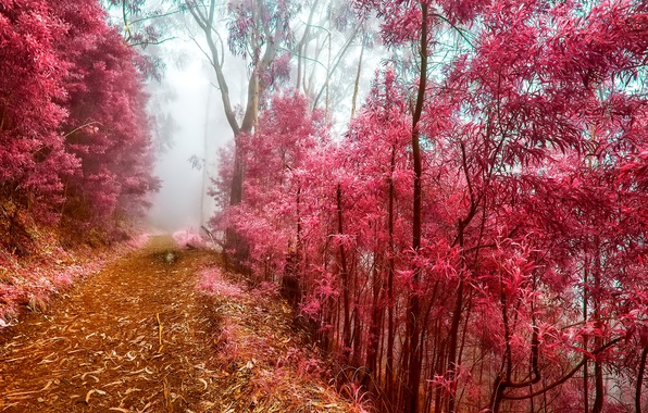 Picture frost, autumn, forest, trees, fog, morning, path