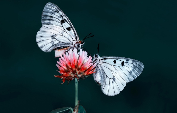 Picture flower, butterfly, nature, insect, moth