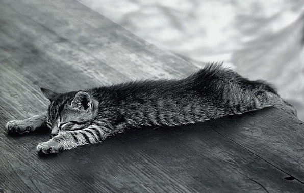Picture Koshak, Black and white, relaxed