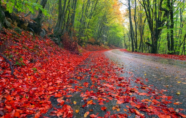 Picture road, autumn, forest, the sky, leaves, trees, landscape, nature