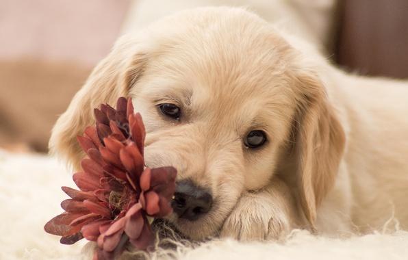 Picture flower, dog, puppy