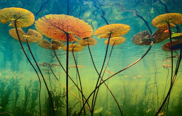 Picture water, algae, plants, depth, underwater world