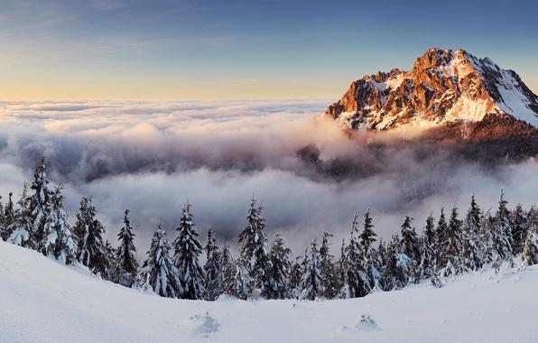 Picture trees, landscape, nature, mountain, panorama, Slovakia