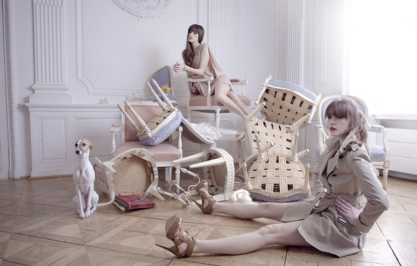 Picture girls, chairs, interior, dog, posing, model, furnished