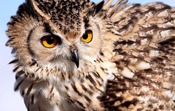 Picture eyes, owl, feathers, color, owl