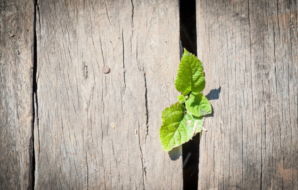 Picture macro, green, background, Wallpaper, the fence, leaf, wooden, wallpaper, leaves, widescreen, background, full screen, HD …