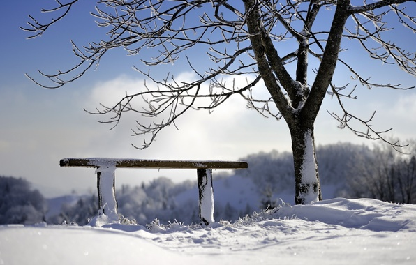 Picture winter, tree, bench