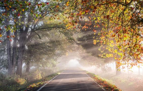 Picture road, autumn, light, trees, nature, foliage, morning, haze