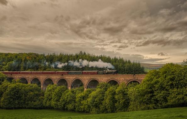 Picture forest, nature, England, train, the engine, railroad, Cornwood viaduc