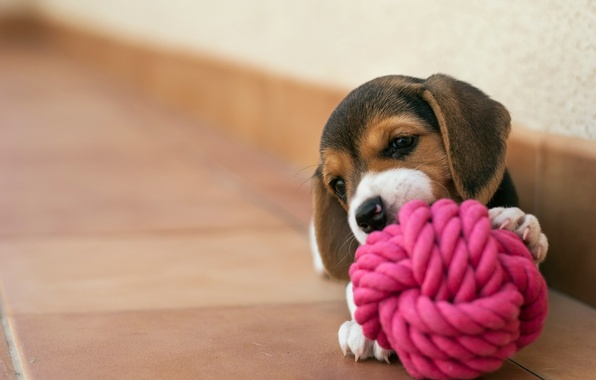 Photo wallpaper house, dog, puppy