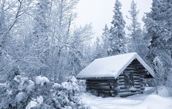 Picture winter, forest, snow, trees, hut, hut, Finland
