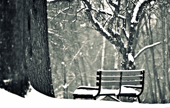 Picture winter, snow, trees, bench, background, widescreen, Wallpaper, mood, shop, shop, wallpaper, bench, widescreen, winter, background, …